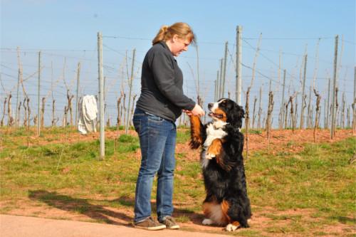 Angebot 4: Jeden Tag eine neue Herausforderung für das Mensch-Hund-Team, kreativ und abwechslungsreich - das bieten Ihnen die unterschiedlichsten Angebote im Bereich Beschäftigung.