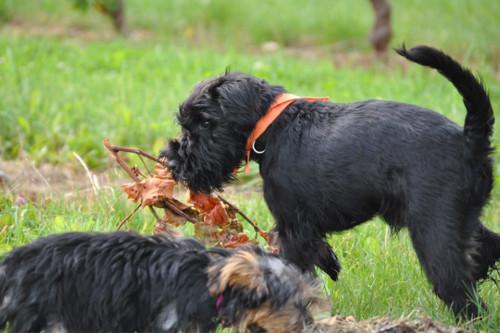 Angebot 2: Mit dem Besuch einer Welpenschule erleichtern Sie Ihrem Hund den Weg in ein ausgeglichenes und harmonisches Hundeleben.