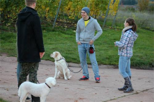 Angebot 3: Helfen Sie Ihrem Hund Sie besser zu verstehen - die Erziehungskurse können Ihnen hierbei sehr hilfreich sein.