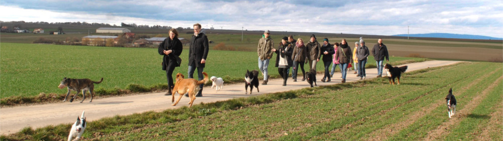 Der Season Walk bieten die Möglichkeit ausgedehnte Spaziergänge in angenehmer Atmosphäre, mit professioneller Betreuung zu verbringen und bieten mit vielen Mensch-Hund-Teams eine schöne Plattform zum gegenseitigen Austausch.
