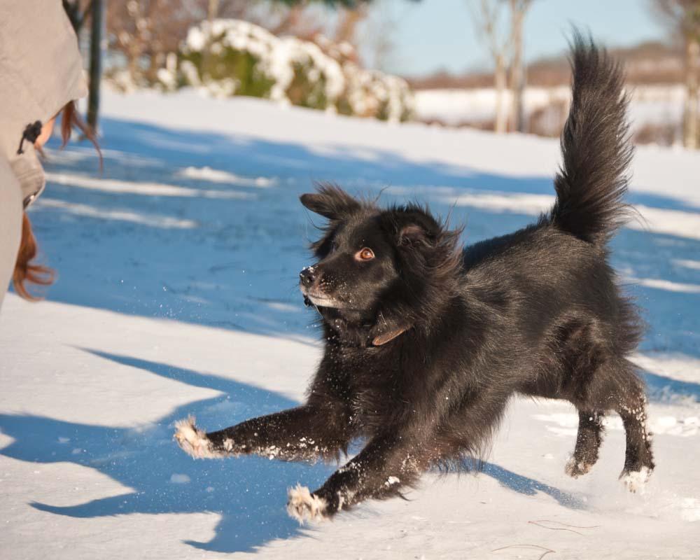 Wolfs Rudel ist nicht irgendeine Hundeschule. Finden Sie raus, was Wolfs Rudel besonders macht!
