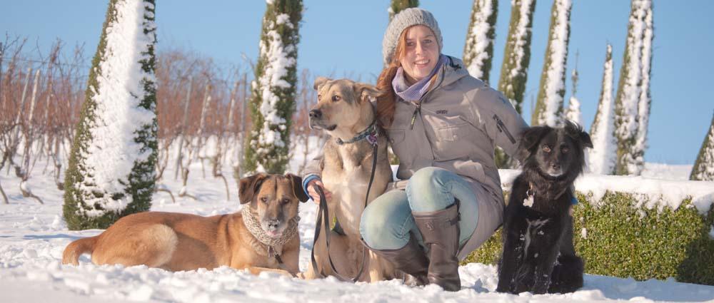 Johanna Wolf - ich stelle mich vor: wie ich auf den Hund kam und warum ich heute mit Hunden arbeite.