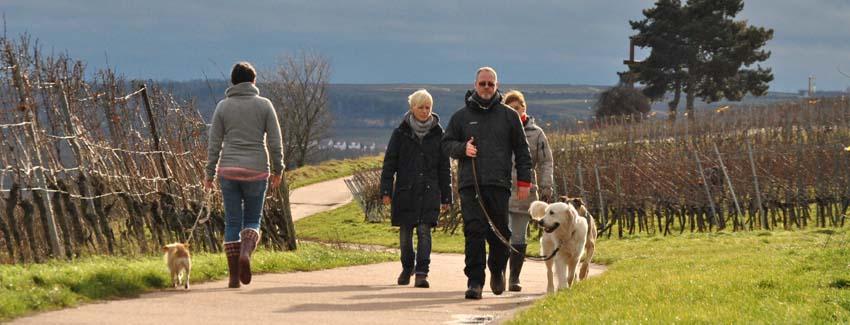 In freier Wildbahn bietet Ihnen die Möglichkeit Hundebegegnungen in einer kontrollierten Umgebung zu üben und zu festigen.